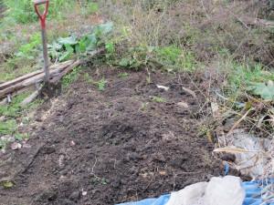 種芋保存5