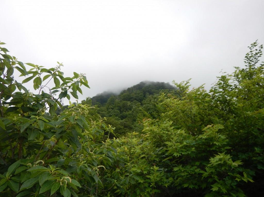 荒島岳下山0012